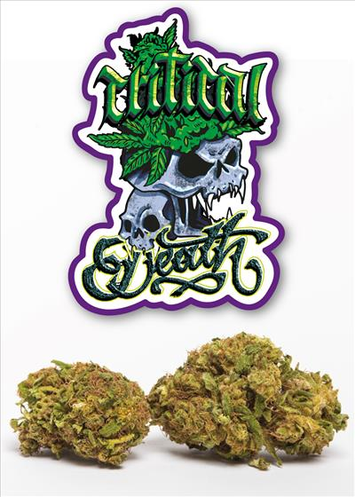 Critical death new strain